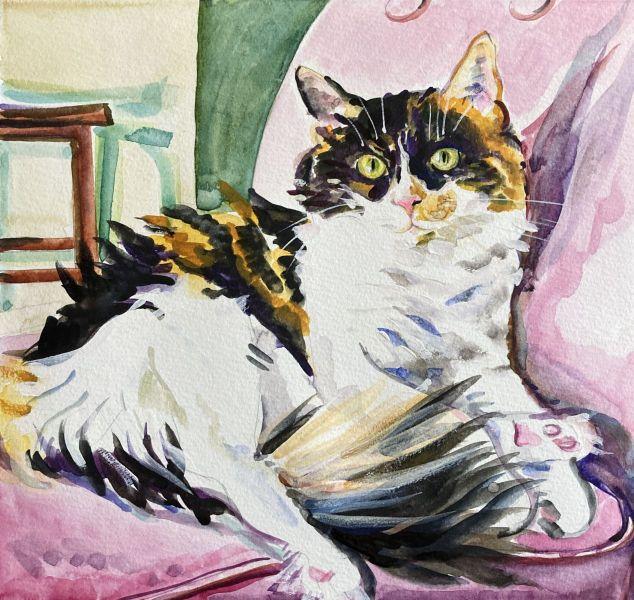 bandit-cat-portrait-lighter